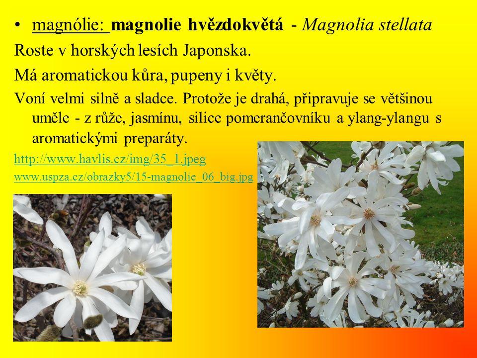 •magnólie: magnolie hvězdokvětá - Magnolia stellata Roste v horských lesích Japonska. Má aromatickou kůra, pupeny i květy. Voní velmi silně a sladce.