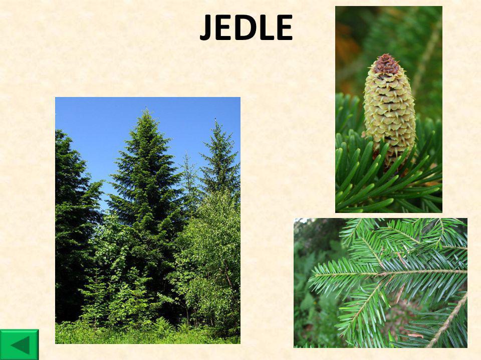 JEDLE
