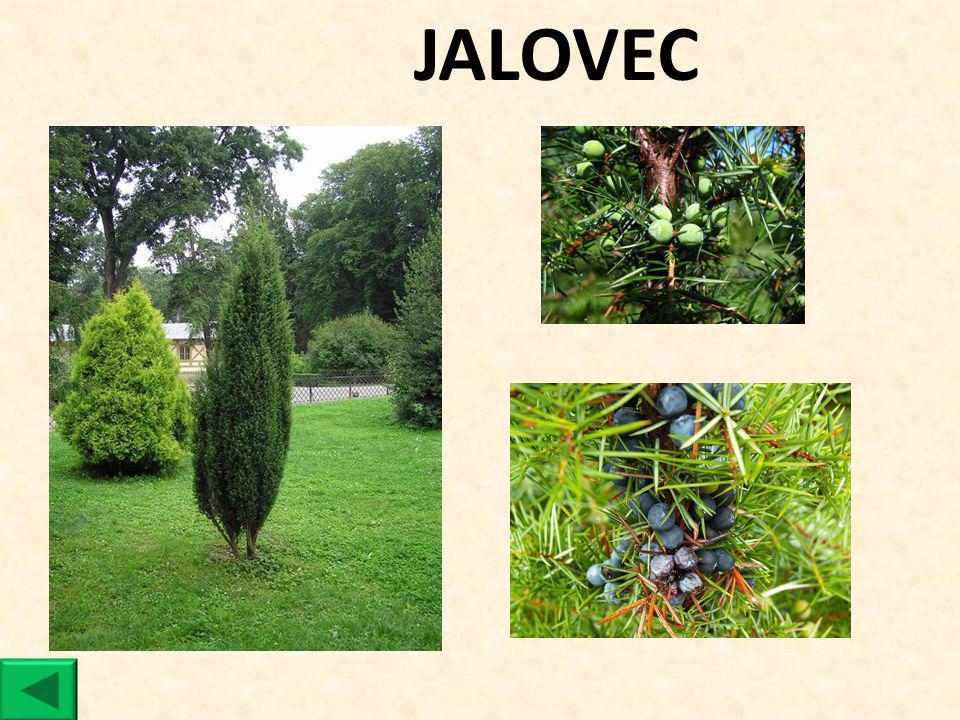 JALOVEC