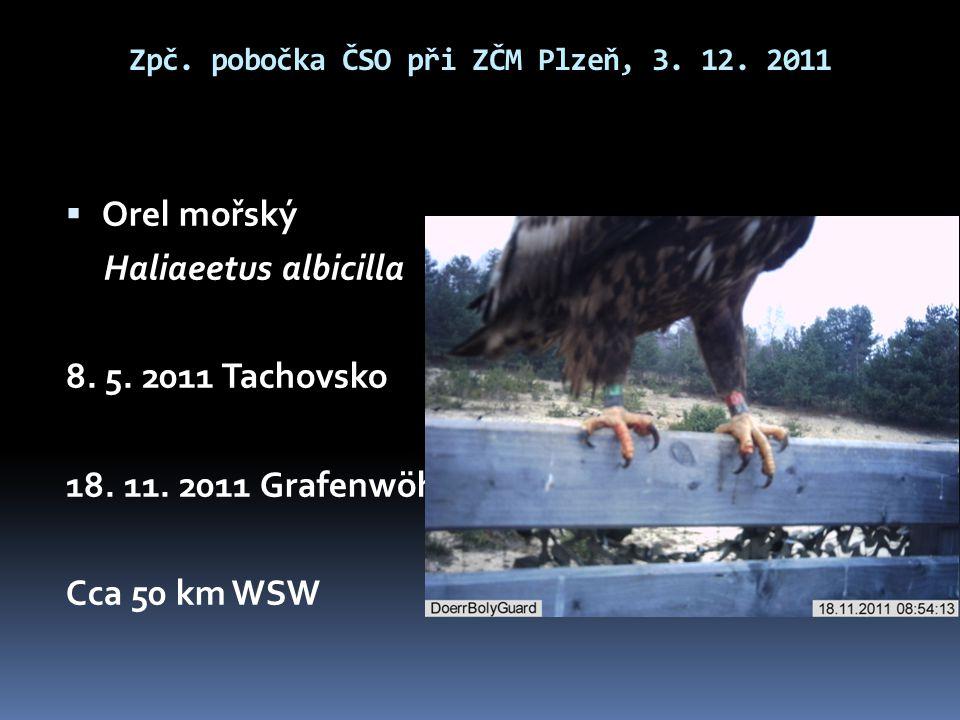  Orel mořský Haliaeetus albicilla 8. 5. 2011 Tachovsko 18. 11. 2011 Grafenwöhr Cca 50 km WSW