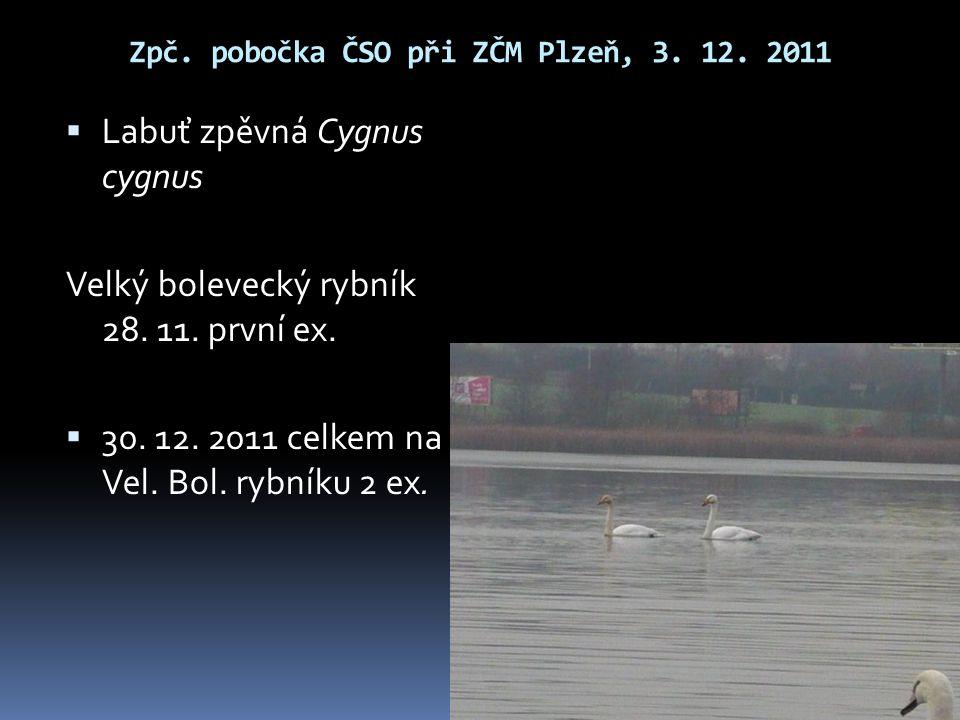 Zpč. pobočka ČSO při ZČM Plzeň, 3. 12. 2011  Labuť zpěvná Cygnus cygnus Velký bolevecký rybník 28. 11. první ex.  30. 12. 2011 celkem na Vel. Bol. r
