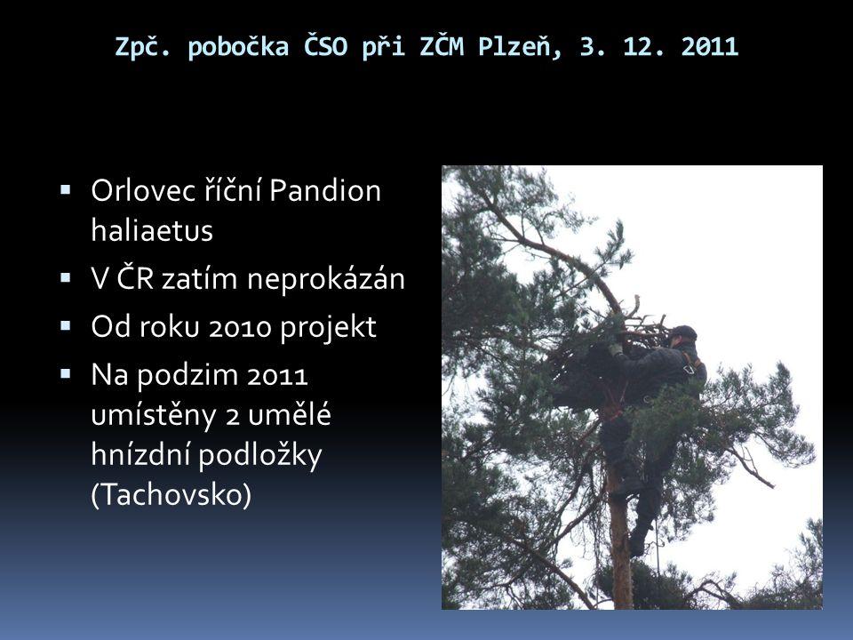 Zpč. pobočka ČSO při ZČM Plzeň, 3. 12. 2011  Orlovec říční Pandion haliaetus  V ČR zatím neprokázán  Od roku 2010 projekt  Na podzim 2011 umístěny