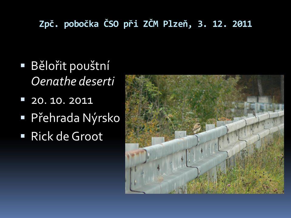 Zpč. pobočka ČSO při ZČM Plzeň, 3. 12. 2011  Bělořit pouštní Oenathe deserti  20. 10. 2011  Přehrada Nýrsko  Rick de Groot