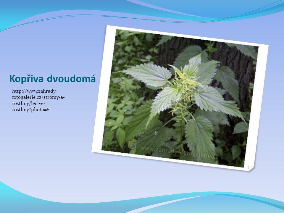 Kopřiva dvoudomá http://www.zahrady- fotogalerie.cz/stromy-a- rostliny/lecive- rostliny?photo=6