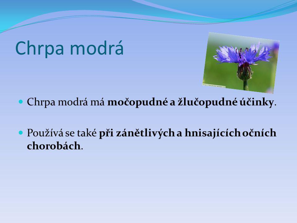Chrpa modrá  Chrpa modrá má močopudné a žlučopudné účinky.  Používá se také při zánětlivých a hnisajících očních chorobách.