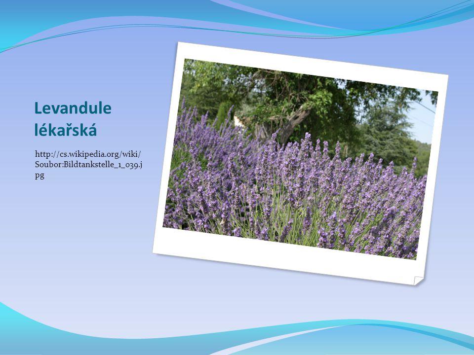 Levandule lékařská http://cs.wikipedia.org/wiki/ Soubor:Bildtankstelle_1_039.j pg