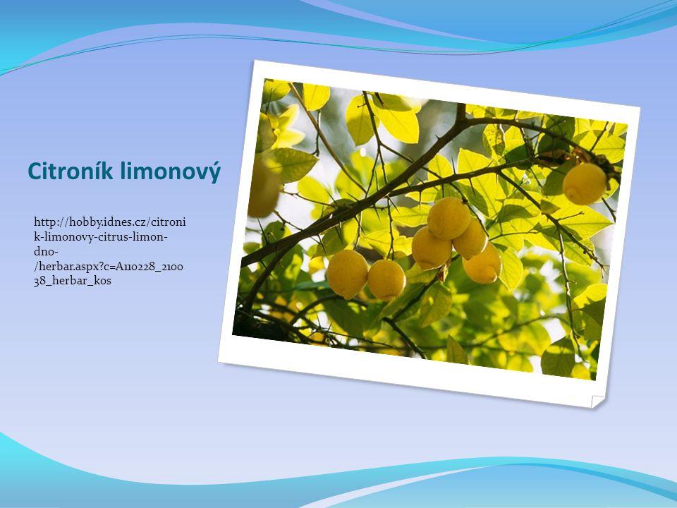 Citroník limonový http://hobby.idnes.cz/citroni k-limonovy-citrus-limon- dno- /herbar.aspx?c=A110228_2100 38_herbar_kos