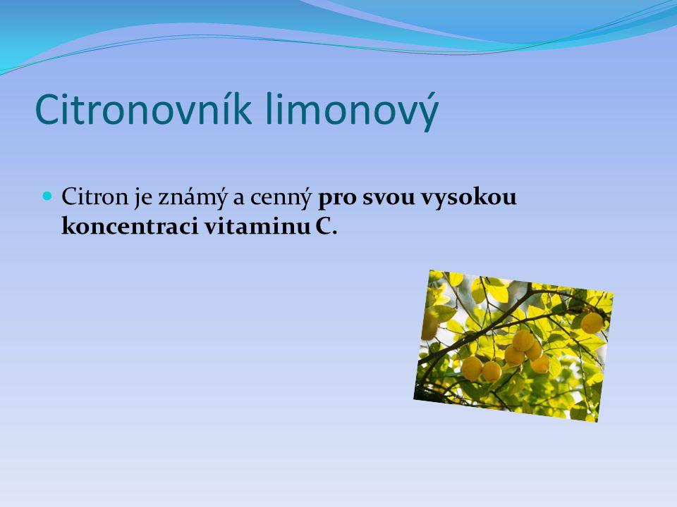 Citronovník limonový  Citron je známý a cenný pro svou vysokou koncentraci vitaminu C.
