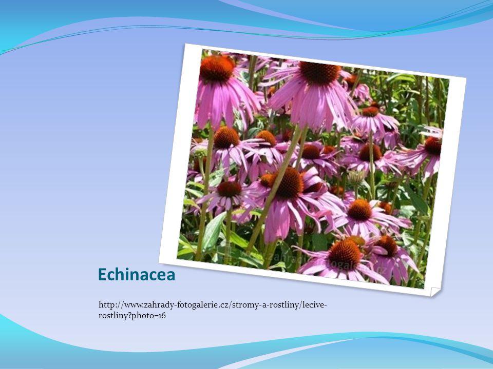 Echinacea http://www.zahrady-fotogalerie.cz/stromy-a-rostliny/lecive- rostliny?photo=16