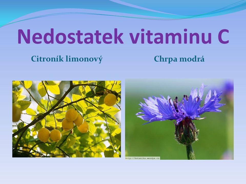 Nedostatek vitaminu C Citroník limonový Chrpa modrá