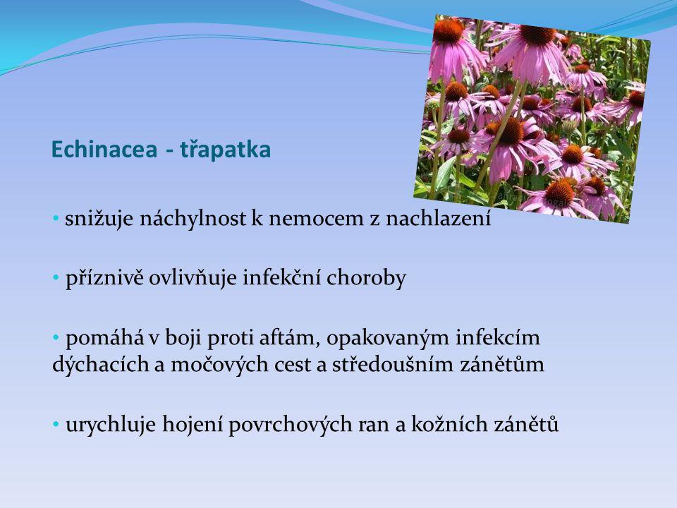 Echinacea - třapatka • snižuje náchylnost k nemocem z nachlazení • příznivě ovlivňuje infekční choroby • pomáhá v boji proti aftám, opakovaným infekcí