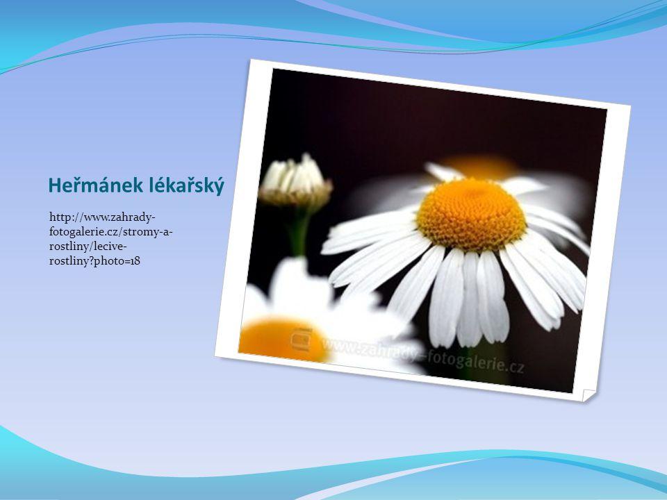 Heřmánek lékařský http://www.zahrady- fotogalerie.cz/stromy-a- rostliny/lecive- rostliny?photo=18