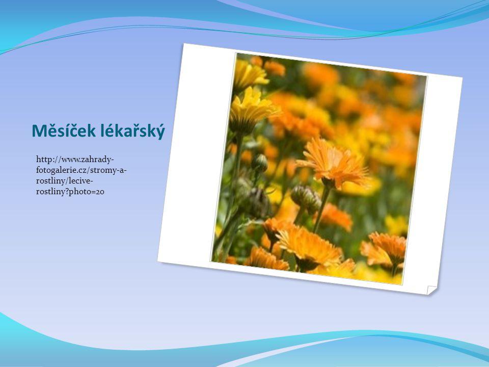 Měsíček lékařský http://www.zahrady- fotogalerie.cz/stromy-a- rostliny/lecive- rostliny?photo=20
