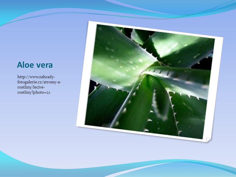 Aloe vera http://www.zahrady- fotogalerie.cz/stromy-a- rostliny/lecive- rostliny?photo=22