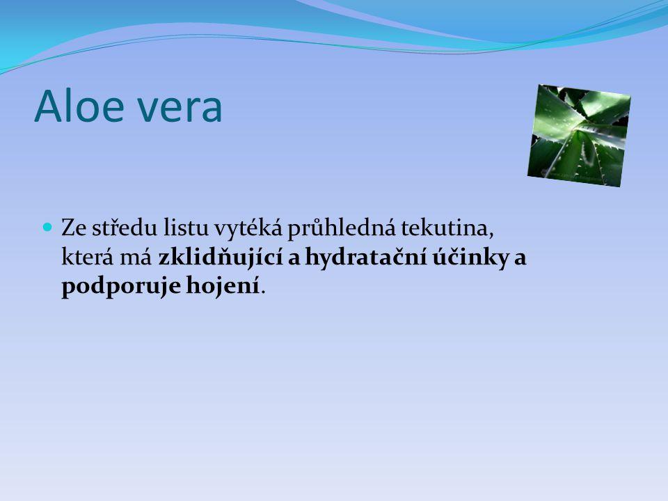 Aloe vera  Ze středu listu vytéká průhledná tekutina, která má zklidňující a hydratační účinky a podporuje hojení.