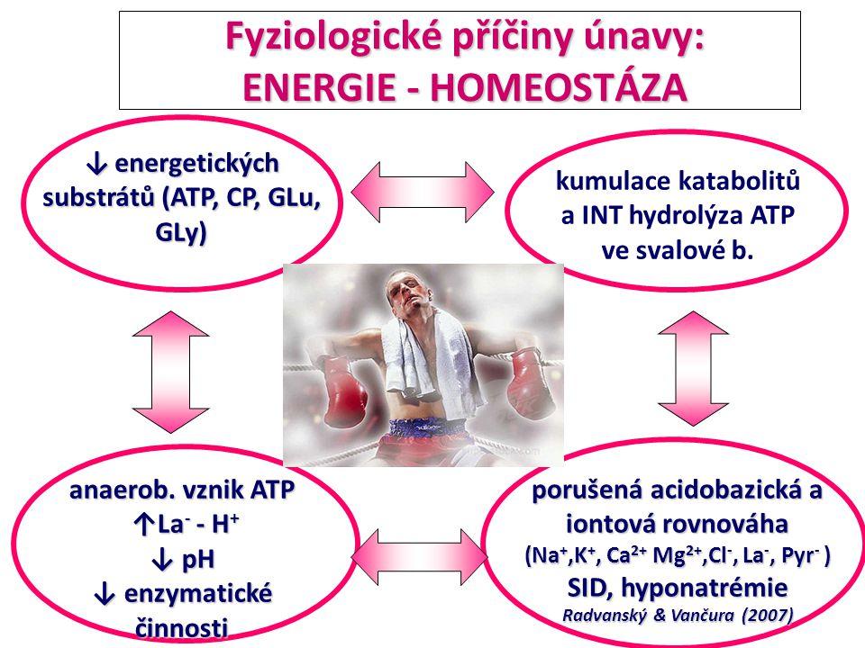 Fyziologické příčiny únavy: ENERGIE - HOMEOSTÁZA Fyziologické příčiny únavy: ENERGIE - HOMEOSTÁZA anaerob. vznik ATP ↑La - - H + ↑La - - H + ↓ pH ↓ en