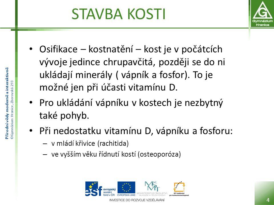 Přírodní vědy moderně a interaktivně ©Gymnázium Hranice, Zborovská 293 STAVBA KOSTI 5