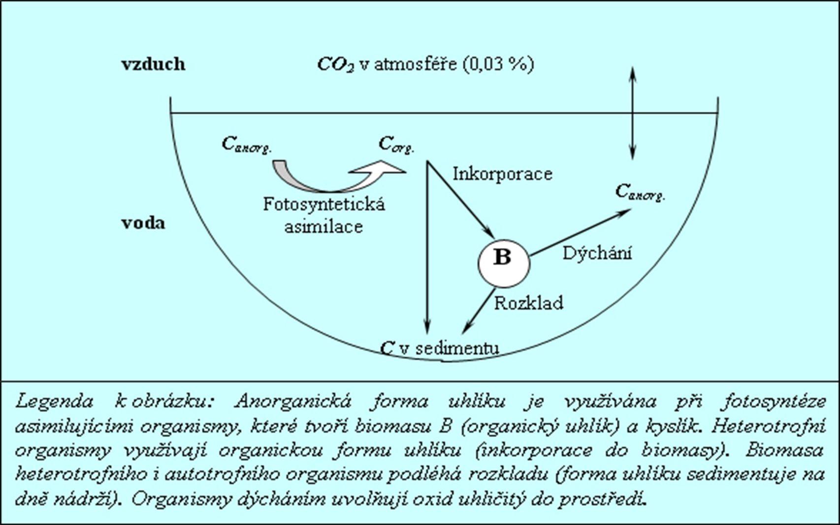 Co je hlavní produkt fotosyntézy? A.Energie B.Organické látky C.Kyslík D.Oxid uhličitý Q 21