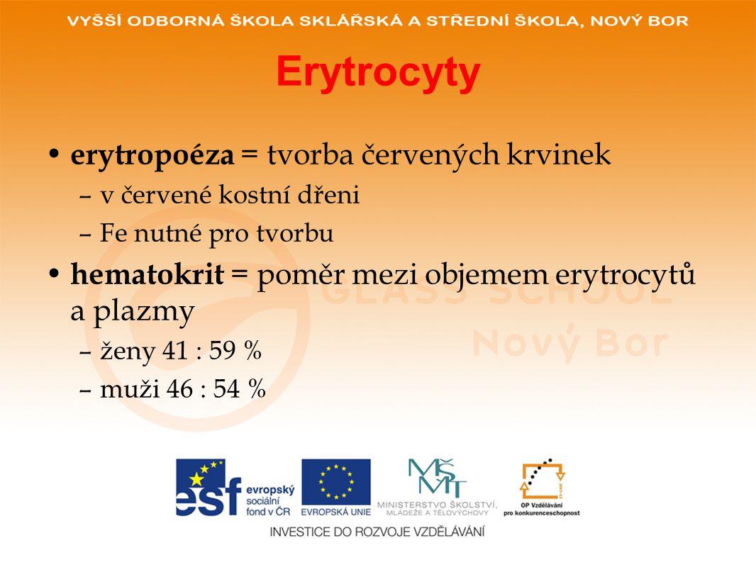 Erytrocyty • erytropoéza = tvorba červených krvinek –v červené kostní dřeni –Fe nutné pro tvorbu • hematokrit = poměr mezi objemem erytrocytů a plazmy –ženy 41 : 59 % –muži 46 : 54 %