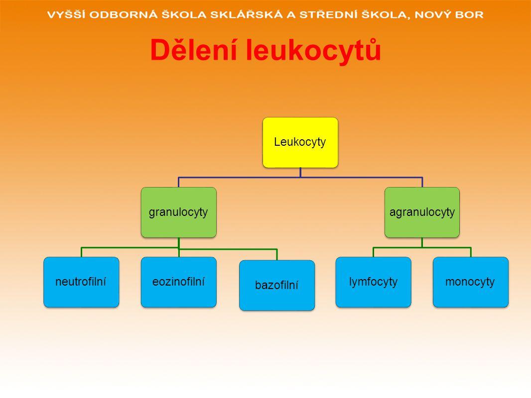 Dělení leukocytů Leukocytygranulocytyneutrofilníeozinofilníbazofilníagranulocytylymfocytymonocyty