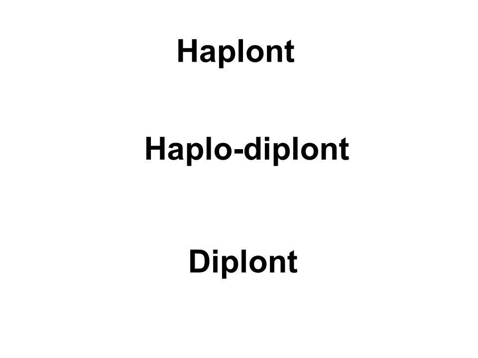 Haplont Haplo-diplont Diplont