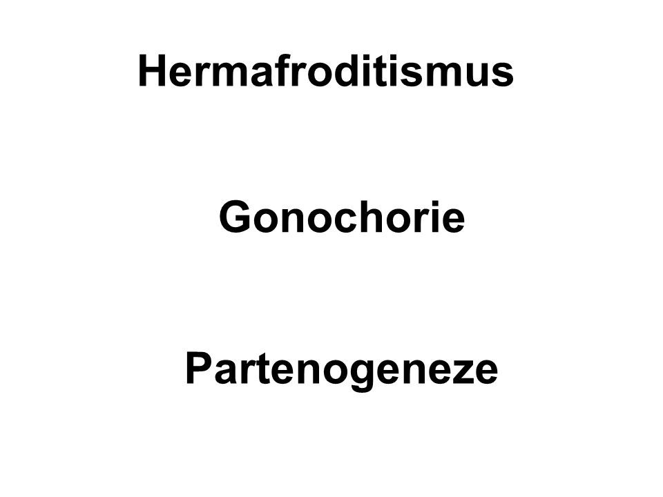Hermafroditismus Gonochorie Partenogeneze