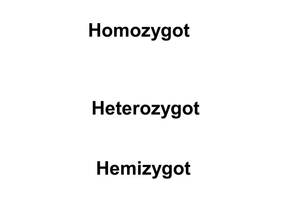 Homozygot Heterozygot Hemizygot