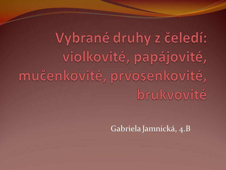 Gabriela Jamnická, 4.B