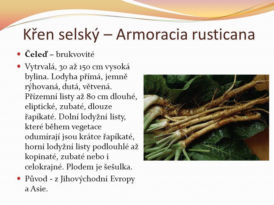 Křen selský – Armoracia rusticana  Čeleď – brukvovité  Vytrvalá, 30 až 150 cm vysoká bylina. Lodyha přímá, jemně rýhovaná, dutá, větvená. Přízemní l