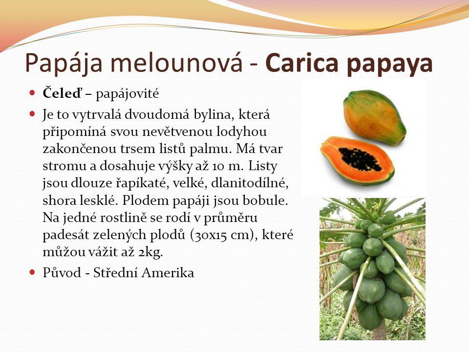 Papája melounová - Carica papaya  Čeleď – papájovité  Je to vytrvalá dvoudomá bylina, která připomíná svou nevětvenou lodyhou zakončenou trsem listů