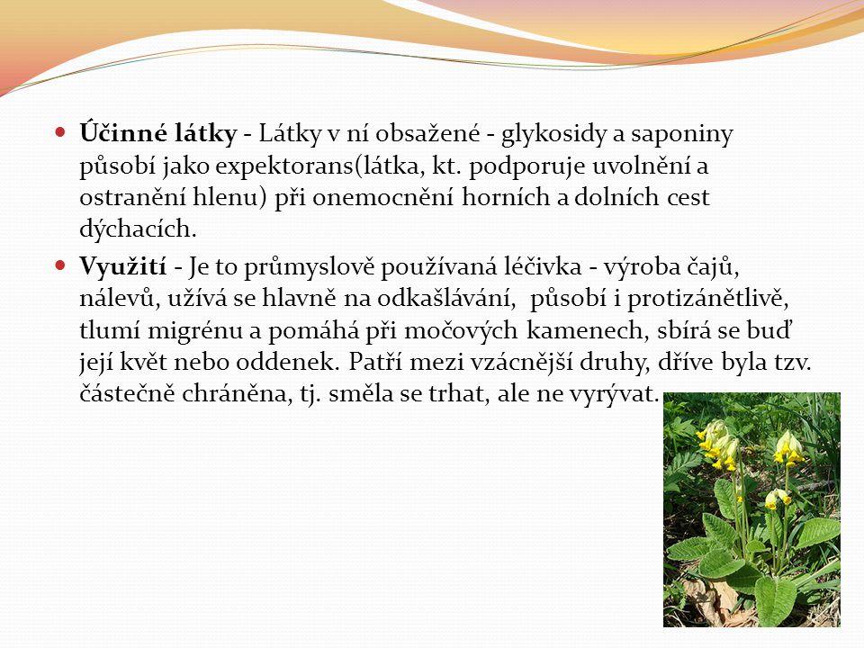  Účinné látky - Látky v ní obsažené - glykosidy a saponiny působí jako expektorans(látka, kt. podporuje uvolnění a ostranění hlenu) při onemocnění ho