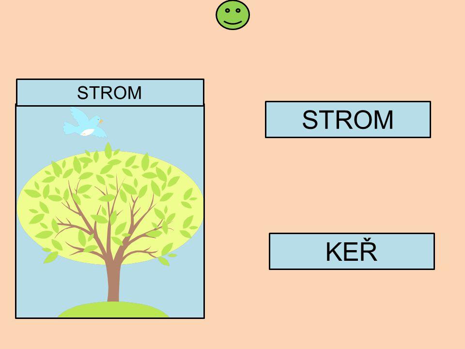 Snímek 10 a 11: Žák čte slova a správné slovo přiřazuje k obrázku bez vzoru slova, při prezentaci se kliknutím na správný obrázek přesune do rámečku, při nespuštěné prezentaci žák či učitel přetahuje správné slovo do rámečku.