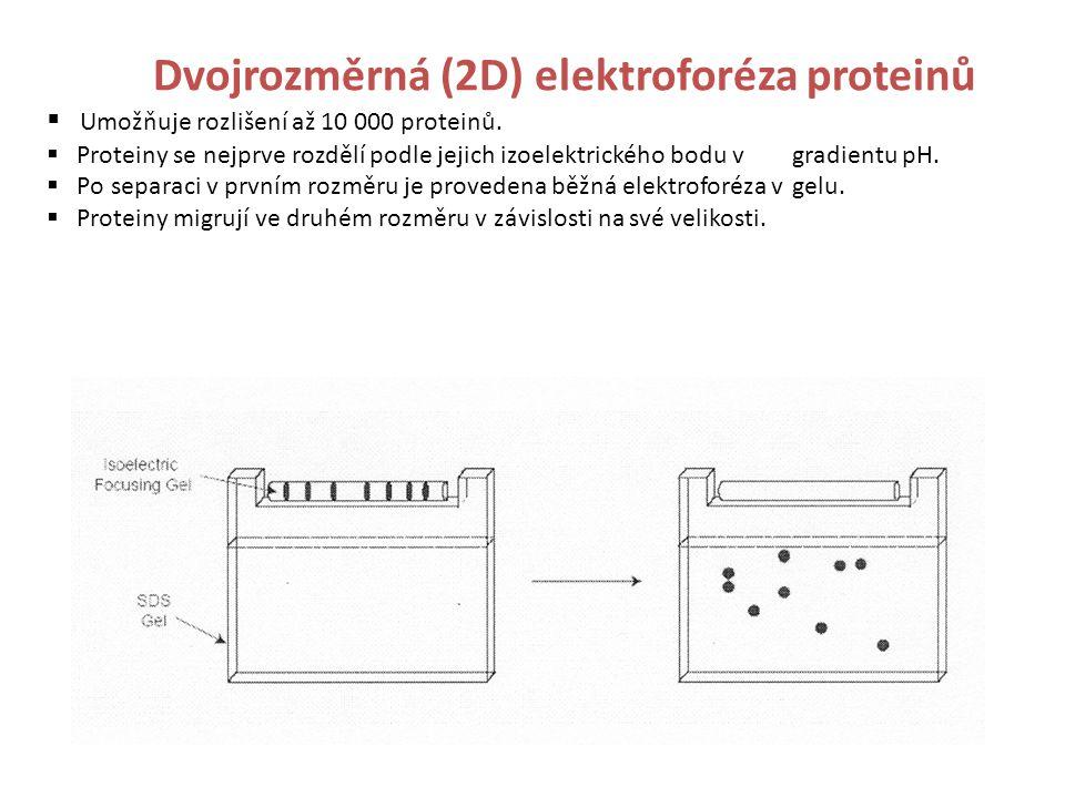 Dvojrozměrná (2D) elektroforéza proteinů  Umožňuje rozlišení až 10 000 proteinů.
