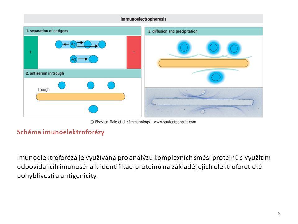6 Imunoelektroforéza je využívána pro analýzu komplexních směsí proteinů s využitím odpovídajícíh imunosér a k identifikaci proteinů na základě jejich elektroforetické pohyblivosti a antigenicity.