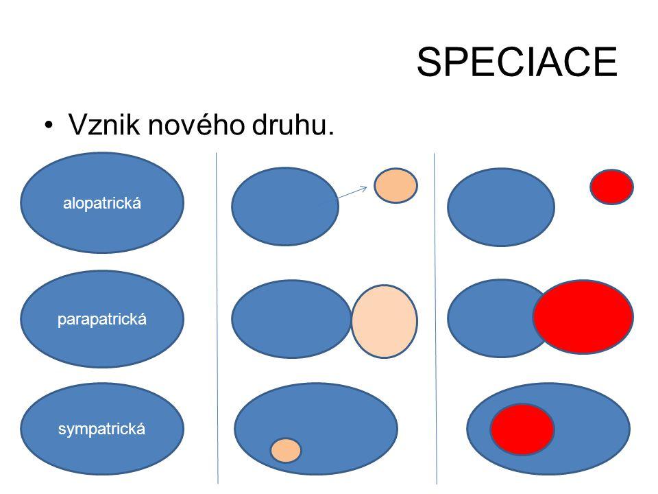 SPECIACE •Vznik nového druhu. alopatrická parapatrická sympatrická
