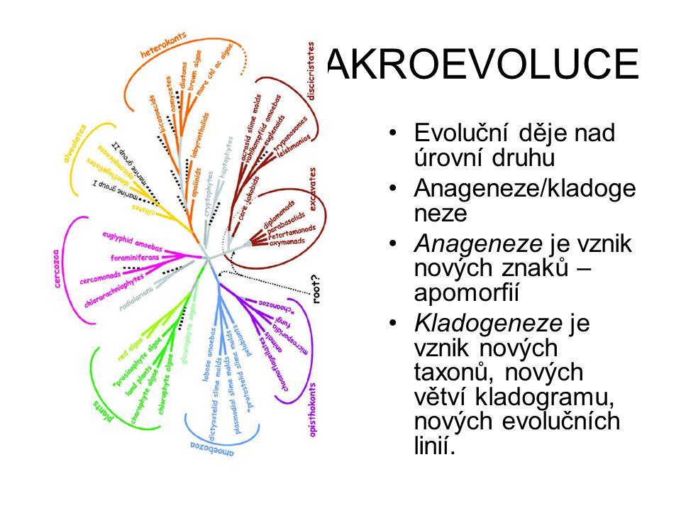 MAKROEVOLUCE •Evoluční děje nad úrovní druhu •Anageneze/kladoge neze •Anageneze je vznik nových znaků – apomorfií •Kladogeneze je vznik nových taxonů,