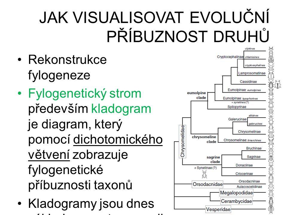 JAK VISUALISOVAT EVOLUČNÍ PŘÍBUZNOST DRUHŮ •Rekonstrukce fylogeneze •Fylogenetický strom především kladogram je diagram, který pomocí dichotomického v