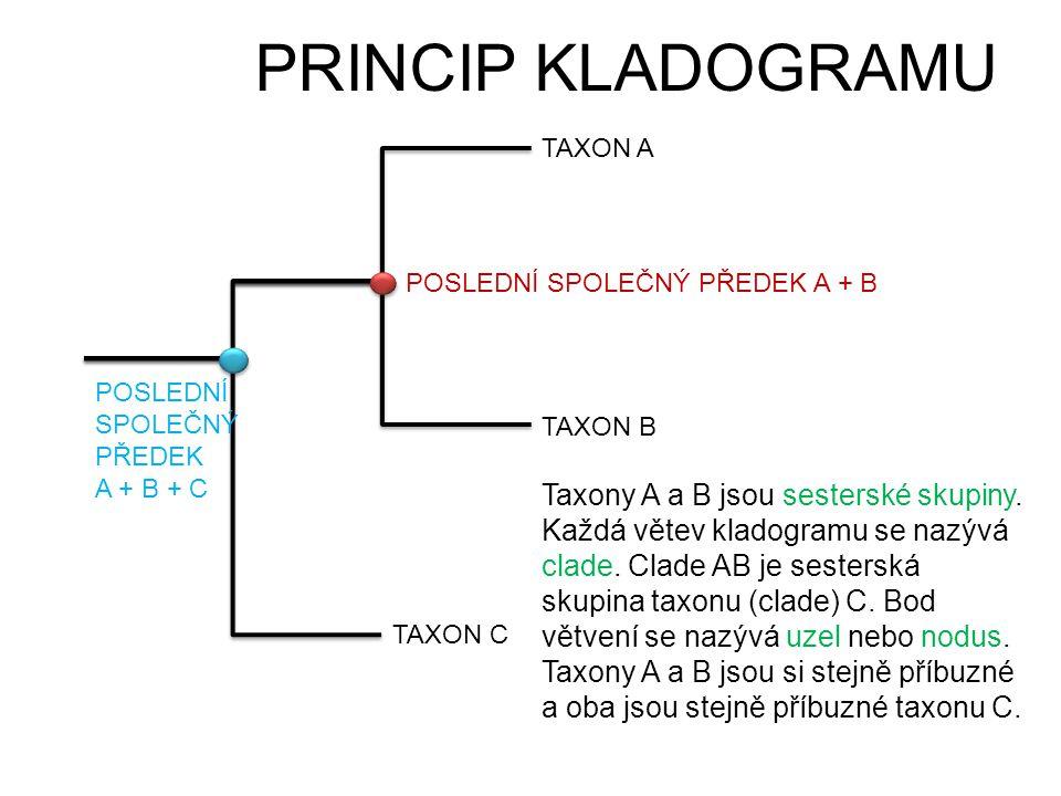 PRINCIP KLADOGRAMU TAXON A TAXON B TAXON C POSLEDNÍ SPOLEČNÝ PŘEDEK A + B POSLEDNÍ SPOLEČNÝ PŘEDEK A + B + C Taxony A a B jsou sesterské skupiny. Každ