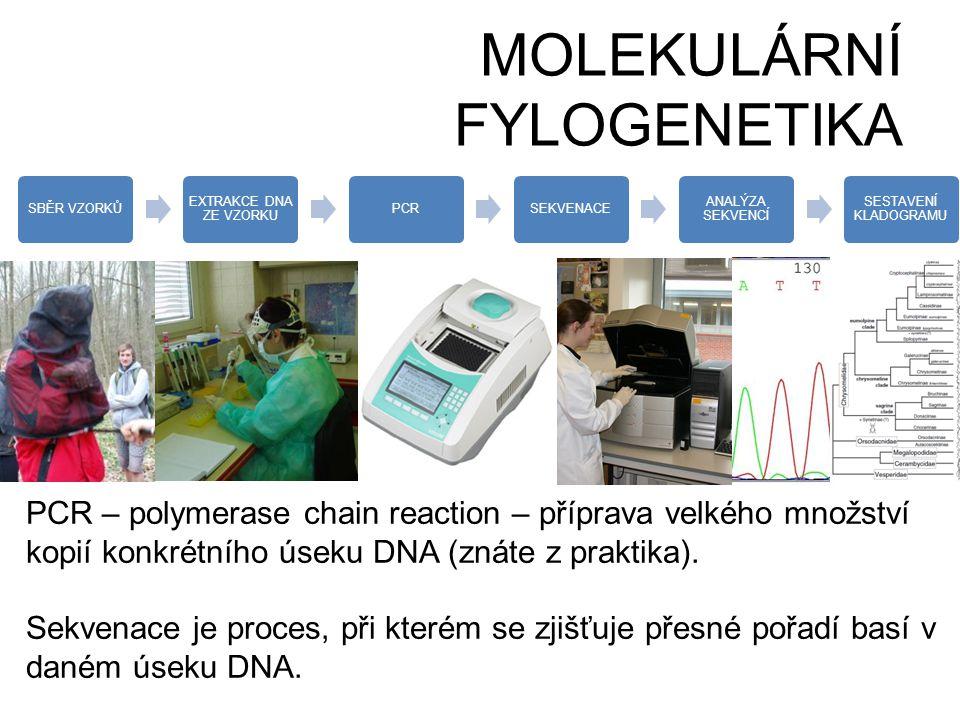 MOLEKULÁRNÍ FYLOGENETIKA SBĚR VZORKŮ EXTRAKCE DNA ZE VZORKU PCRSEKVENACE ANALÝZA SEKVENCÍ SESTAVENÍ KLADOGRAMU PCR – polymerase chain reaction – přípr