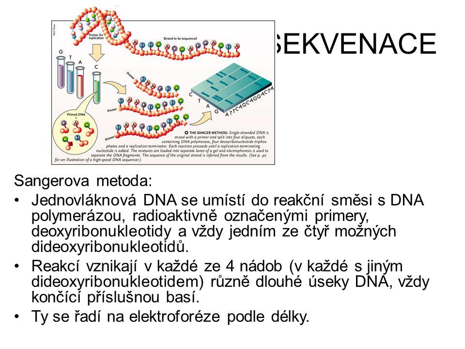 SEKVENACE Sangerova metoda: •Jednovláknová DNA se umístí do reakční směsi s DNA polymerázou, radioaktivně označenými primery, deoxyribonukleotidy a vž
