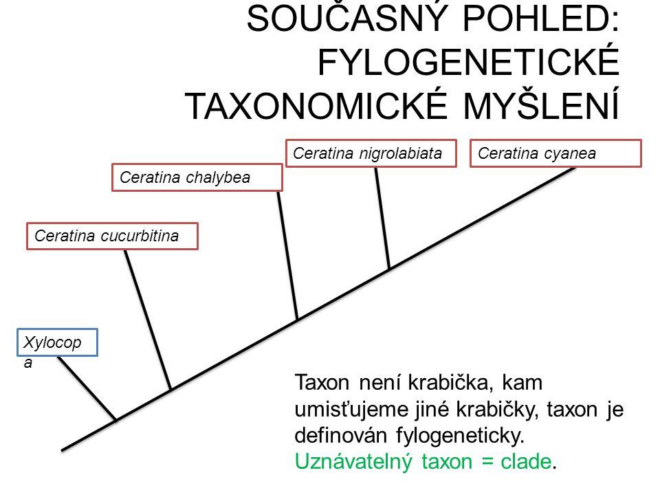 Ceratina chalybea Ceratina cucurbitina Ceratina nigrolabiataCeratina cyanea Xylocop a Taxon není krabička, kam umisťujeme jiné krabičky, taxon je defi
