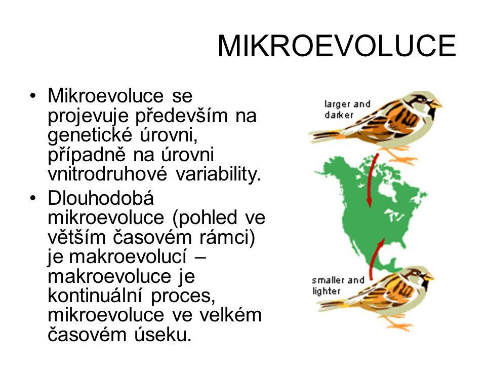 MIKROEVOLUCE •Mikroevoluce se projevuje především na genetické úrovni, případně na úrovni vnitrodruhové variability. •Dlouhodobá mikroevoluce (pohled