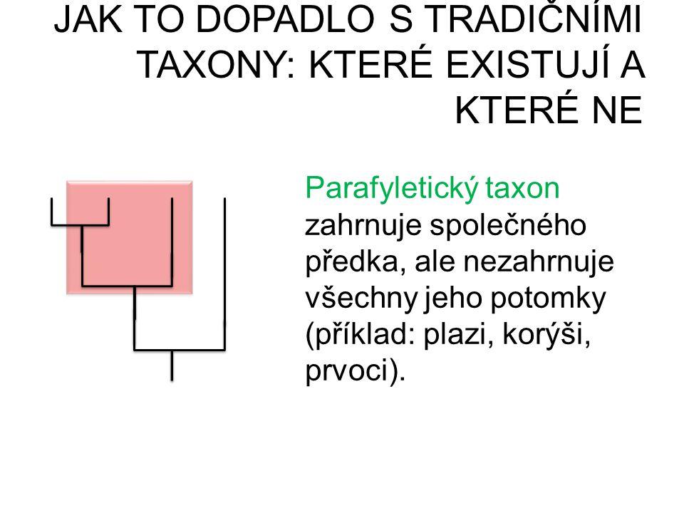 JAK TO DOPADLO S TRADIČNÍMI TAXONY: KTERÉ EXISTUJÍ A KTERÉ NE PARAFYLIEPOLYFYLIE Parafyletický taxon zahrnuje společného předka, ale nezahrnuje všechn