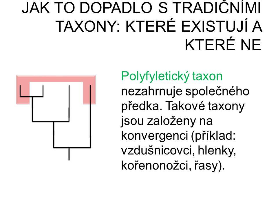 JAK TO DOPADLO S TRADIČNÍMI TAXONY: KTERÉ EXISTUJÍ A KTERÉ NE PARAFYLIEPOLYFYLIE Polyfyletický taxon nezahrnuje společného předka. Takové taxony jsou