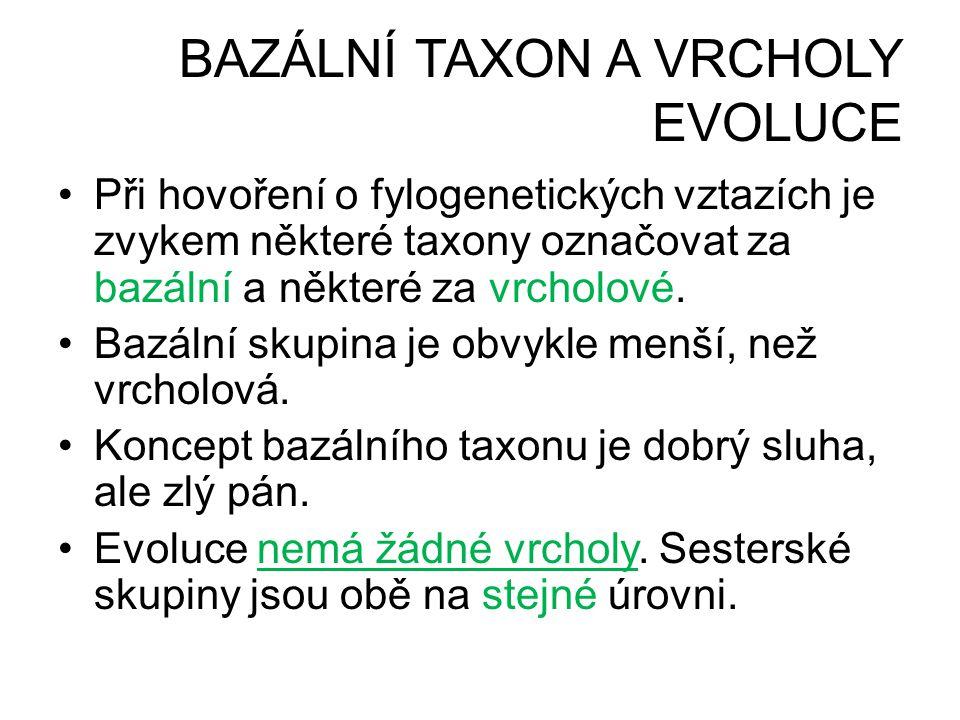 BAZÁLNÍ TAXON A VRCHOLY EVOLUCE •Při hovoření o fylogenetických vztazích je zvykem některé taxony označovat za bazální a některé za vrcholové. •Bazáln
