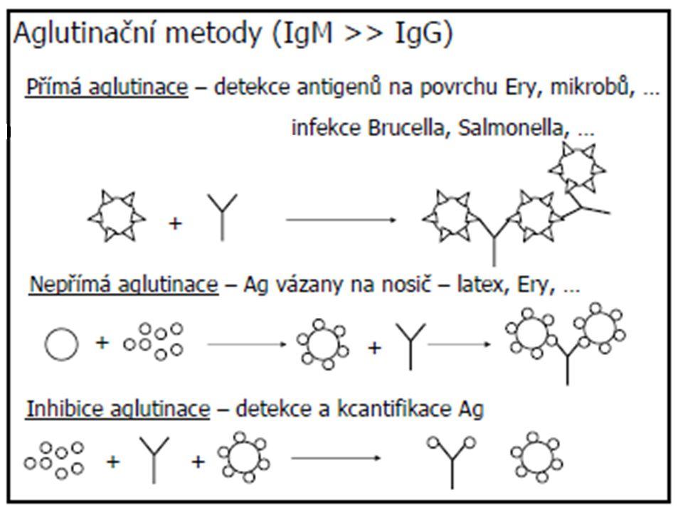 TESTOVÁNÍ FUNKCÍ T LYMFOCYTŮ IN VITRO je založeno na testování: schopnosti T lymfocytů proliferovat schopnosti T lymfocytů produkovat cytokiny PROLIFERACE T LYMFOCYTŮ: in vitro kultivace kultivační media (thymové působky) CO 2 atmosféra FUNKČNÍ TESTY