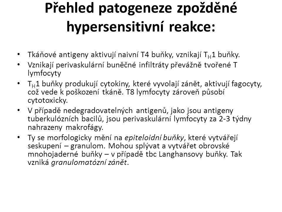 Přehled patogeneze zpožděné hypersensitivní reakce: • Tkáňové antigeny aktivují naivní T4 buňky, vznikají T H 1 buňky. • Vznikají perivaskulární buněč