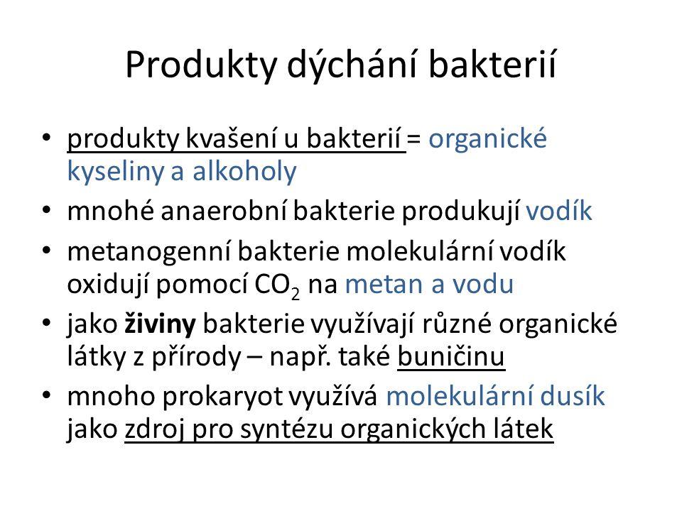 Produkty dýchání bakterií • produkty kvašení u bakterií = organické kyseliny a alkoholy • mnohé anaerobní bakterie produkují vodík • metanogenní bakte