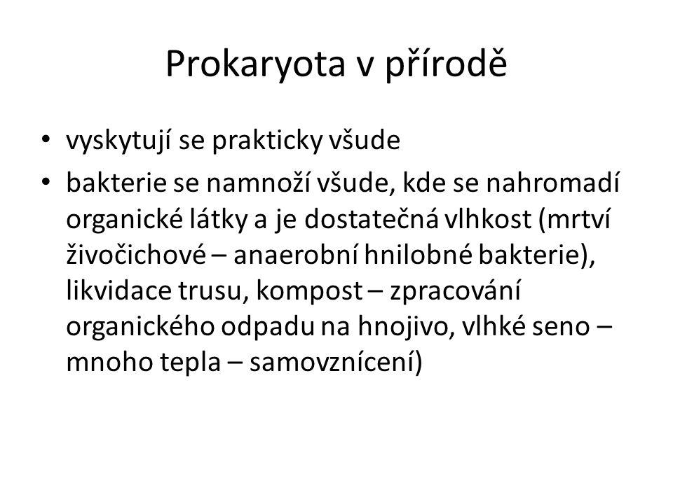 Prokaryota v přírodě • vyskytují se prakticky všude • bakterie se namnoží všude, kde se nahromadí organické látky a je dostatečná vlhkost (mrtví živoč