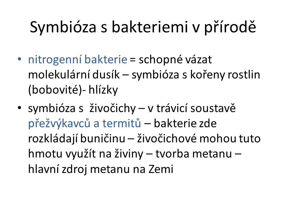 Symbióza s bakteriemi v přírodě • nitrogenní bakterie = schopné vázat molekulární dusík – symbióza s kořeny rostlin (bobovité)- hlízky • symbióza s ži